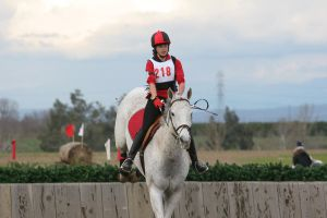 Fleabitten Gray Eventing Cross Country Jumping by HorseStockPhotos