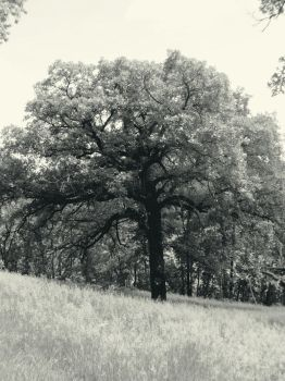 Ghostly Limbs by GrindhouseCinema