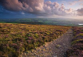 Heather and Gorse by Andyw01