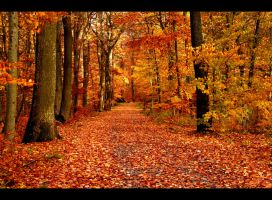 Autumnal road II by JoInnovate