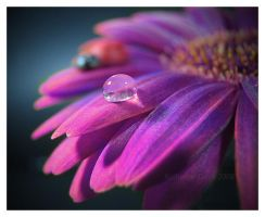 Purple Drop by KatherineDavis