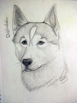 Diefenbaker the 'wolf' by sheepysleep