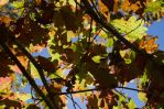2014-10-22 Colors of the Day 10 by skydancer-stock