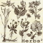 herbs brushes 2 by beti123