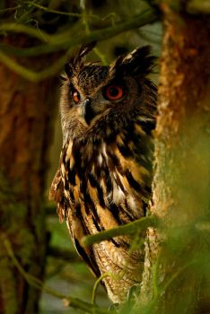 Eagle owl by Shadow-and-Flame-86
