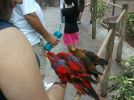 Me at Busch Gardens with Birds by LittleWindy7