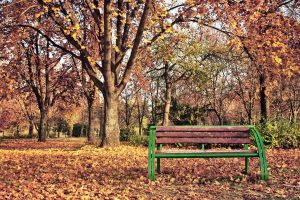Bench by dardaniM