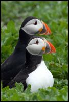 Best Friends - The Puffin Pals by nitsch