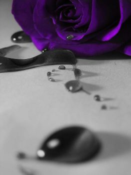 Purple Rose by OrionKale