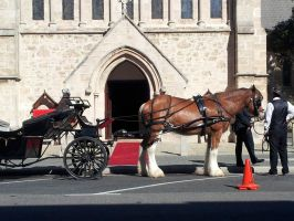 Clydesdale Carriage by Roses-and-Feathers