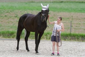 Black Warmblood Mare Well Done by LuDa-Stock