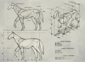 Study - Horse by georgecatalin93
