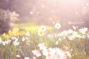 Spring Haze - Day 83 by rosannabell