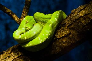 Green snake by photo-exile