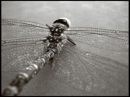 dragonfly by earthlab