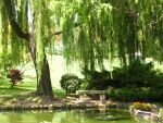 The bench and the Willow by SunshineQueen