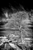 Infrared Trees by Okavanga