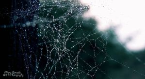 The web by Meireis