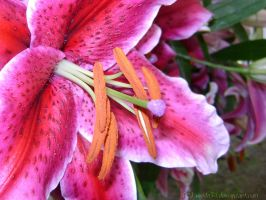 Liliaceous II by weida34