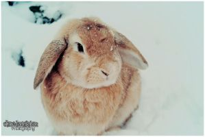 Marley in the snow! by Clerdy