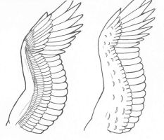 Wing study - feather by Kth-dragon