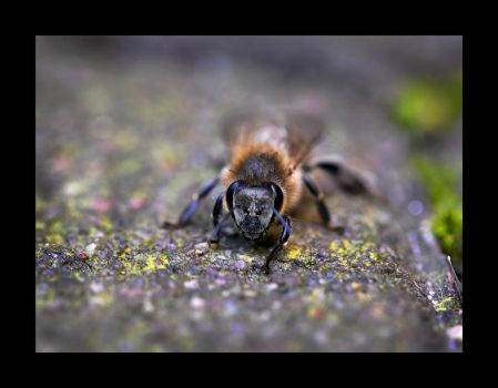 Bee 2 by Hector42
