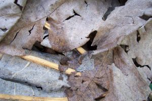 Rotting leaf ground by paintresseye