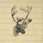 Deer with Antlers Digital Graphic No.497 by VintageRetroAntique