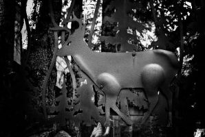 Deer by Bazz-photography