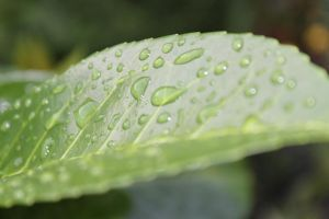Leaf after rain by crystalcleargfx