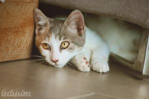 Under the sofa by BambisLogic