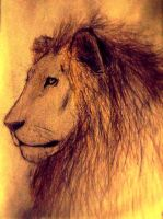 Lion by Atlus154274