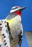 Yellow Bellied Sapsucker 2 by Bagheera3