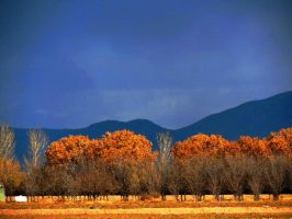 Trees of Autumn by SharPhotography