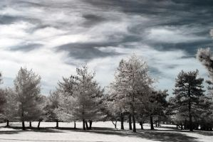 Infrared Skyscapes by ilimel