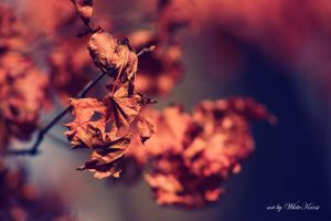 Color of autumn by WhiteKarsi