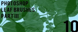 Photoshop Leaf Brushes Pt III by sdwhaven