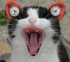 Cat 'o Clockyiness by SuiteDesign