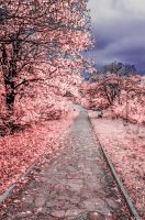 Infrared dream by JosivBG