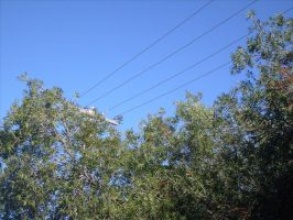 Powerlines Through Trees by jess13795