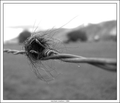 the hair on the fence by vr6stress