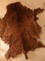 Personal Collection -Fetal Horse Pelt by badassbonestaxidermy