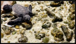 Baby green turtle by ToytownMafia