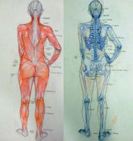Anatomy Overlays by Little-Hofundur
