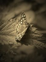 SEPIA BUTTERFLY #2 by ANDYBURGESS