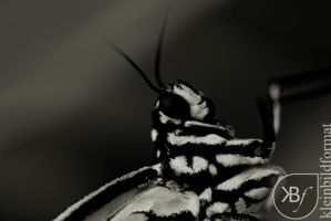 Hello Mister Butterfly by kleinbildformat