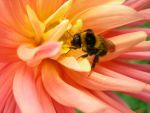 Bee by Arrietty