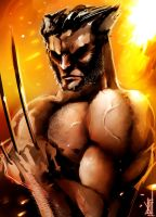 Wolverine by TheRisingSoul