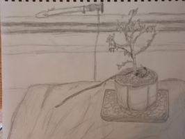 Bonsai tree by PyroRaveHeart71