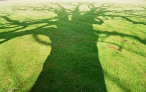 My Shadow As Well by EarthHart